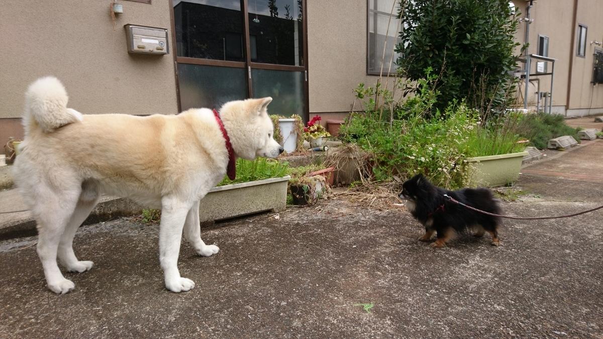 f:id:yokozukioyaji:20200418212724j:plain
