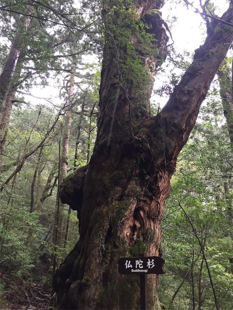 f:id:yokubukashoko:20170514135406j:image