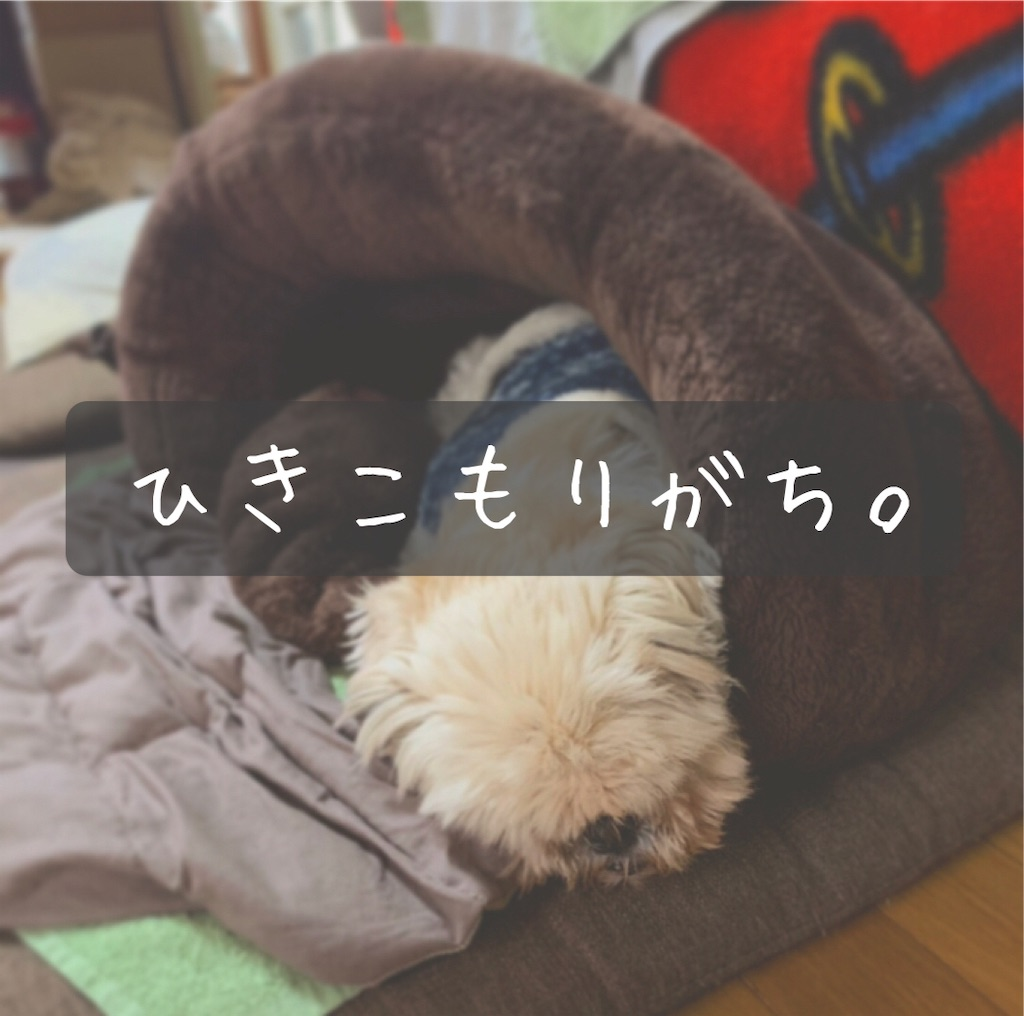 f:id:yomenokikimaru:20210219151548j:image