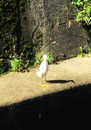 謎の鳥写真その1