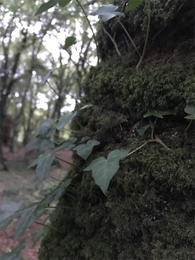 f:id:yomokuma_land:20181003065042j:image