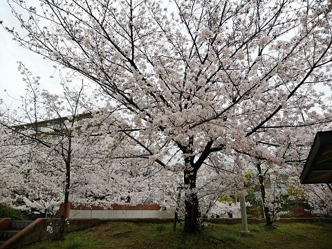 f:id:yomumirukaku:20200401100630j:plain