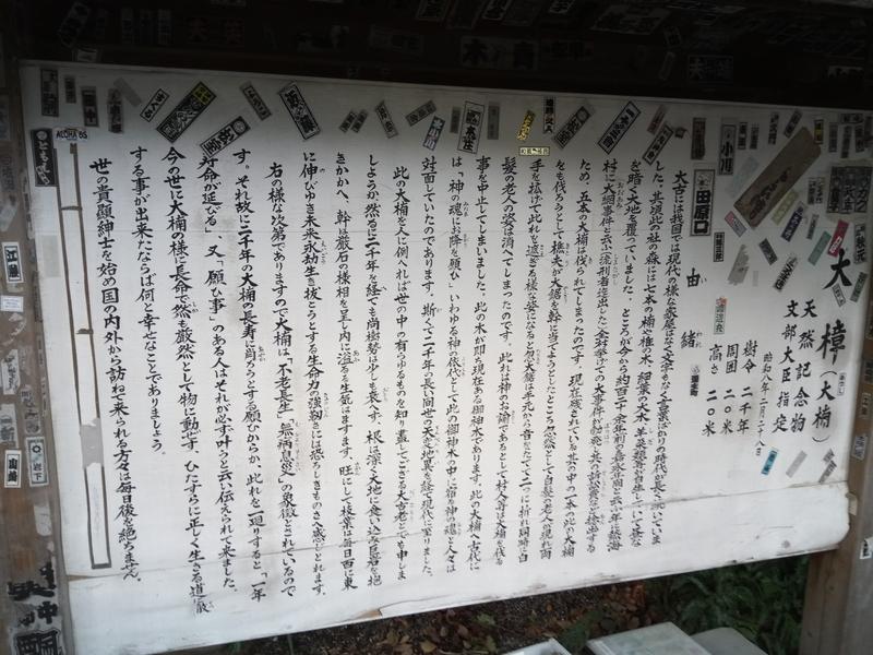 来宮神社の大楠の由緒