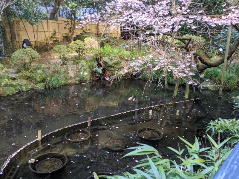 湯河原美術館の池