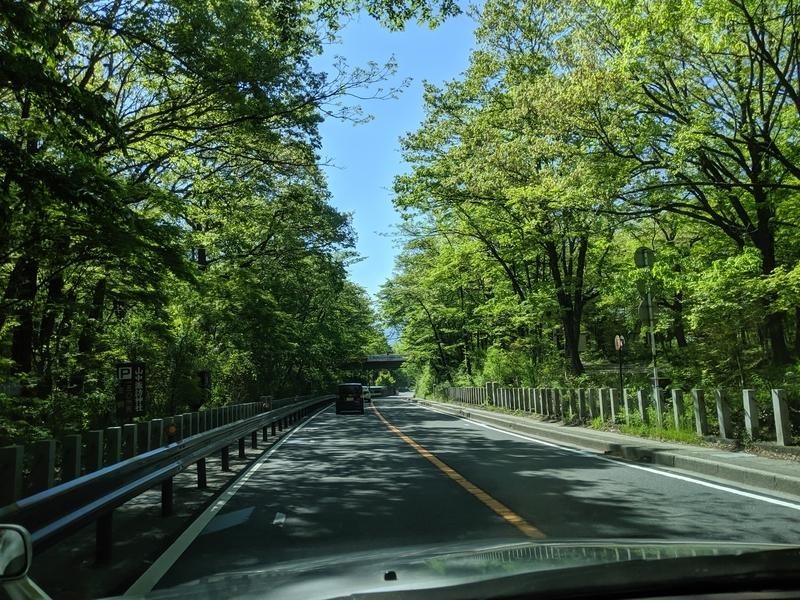 道志道、街路樹が綺麗