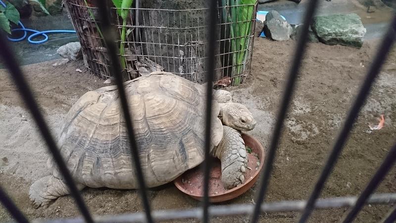 草津熱帯園の亀
