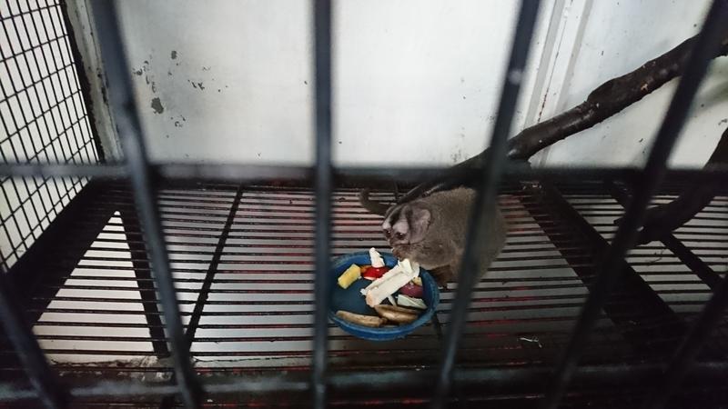 草津熱帯園の食事中の猿