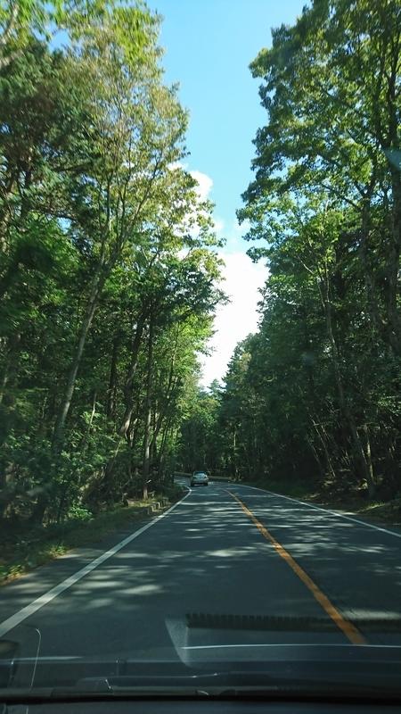帰り道の林道
