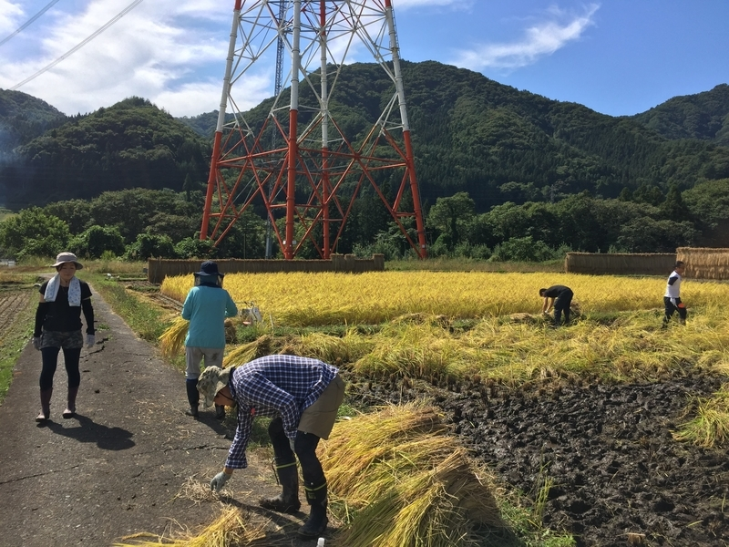 稲刈り作業中風景