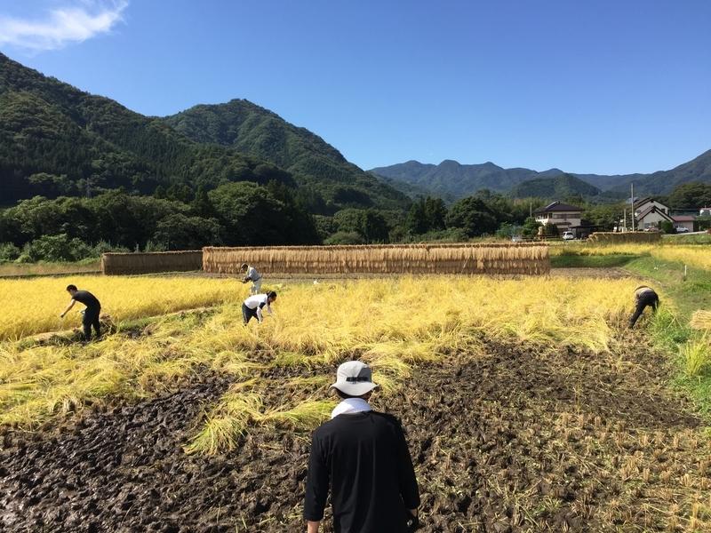 稲刈り作業中風景2