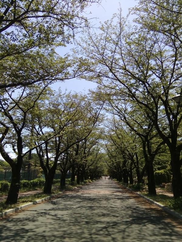 府中の森公園、街路樹