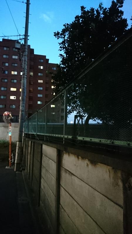 ギリギリ見える隅田川の花火