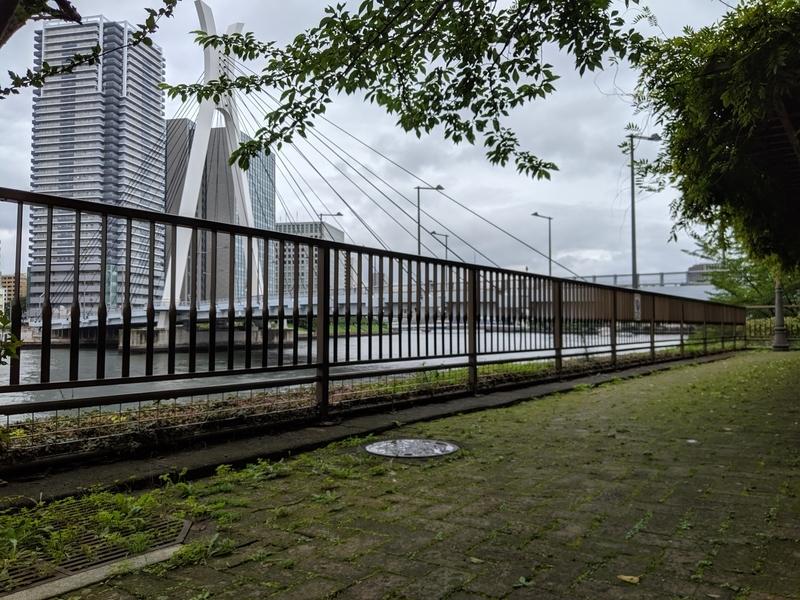 佃公園から中央大橋