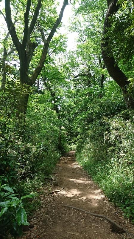 ハイキングコースの木の根が歩きづらい