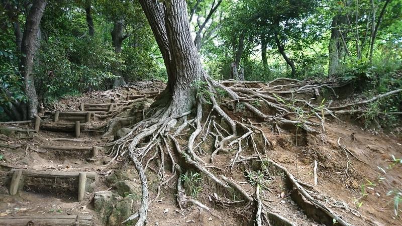 ハイキングコースの木の根が歩きづらい2