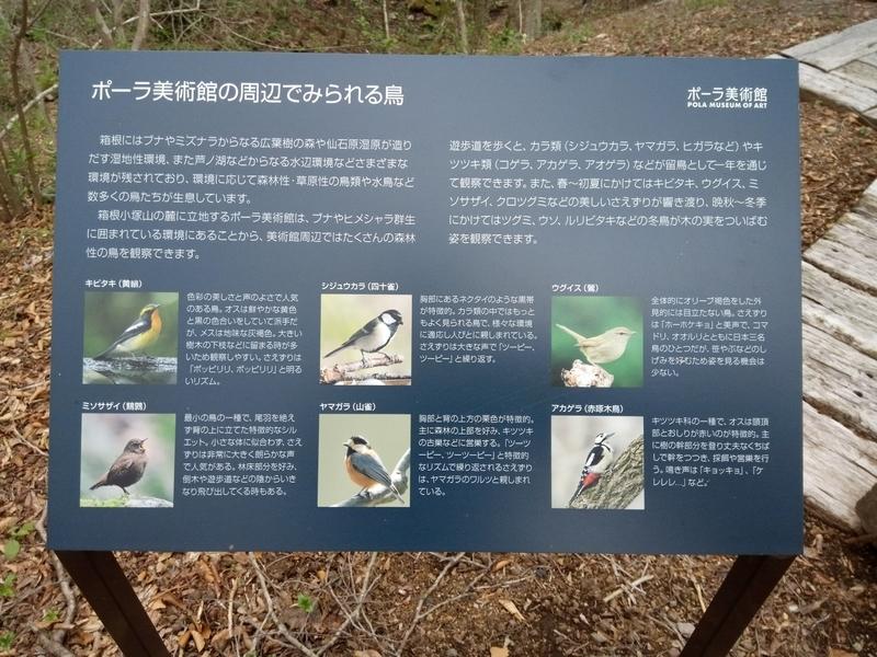 ポーラ美術館の周辺で見られる鳥