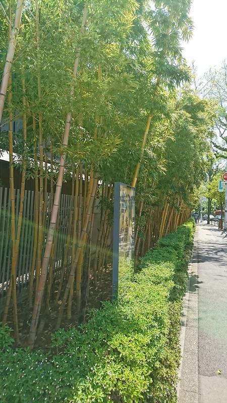 根津美術館入口の竹林