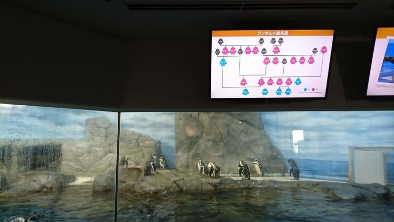 ペンギンの家系図