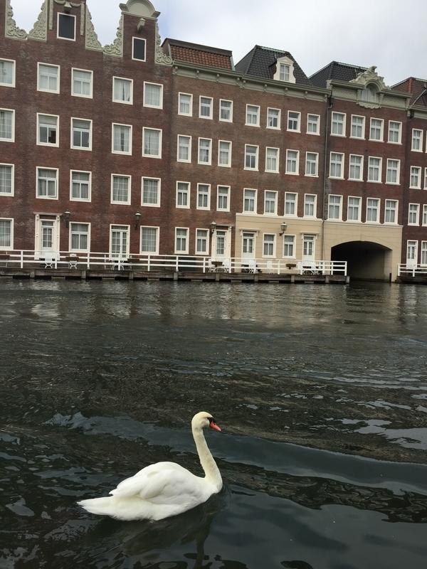 優雅に泳ぐ白鳥