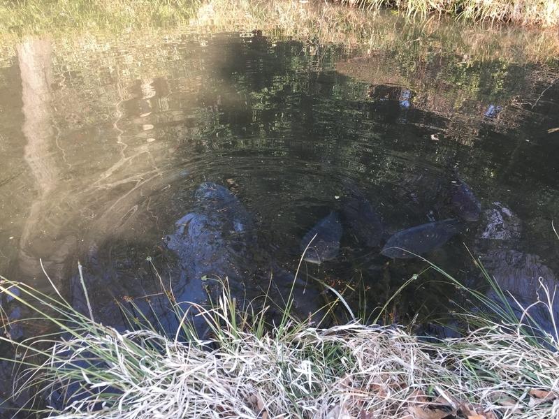 不気味な雰囲気の池
