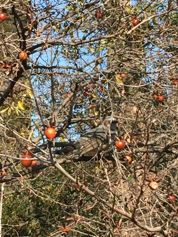 木のみを啄む小鳥