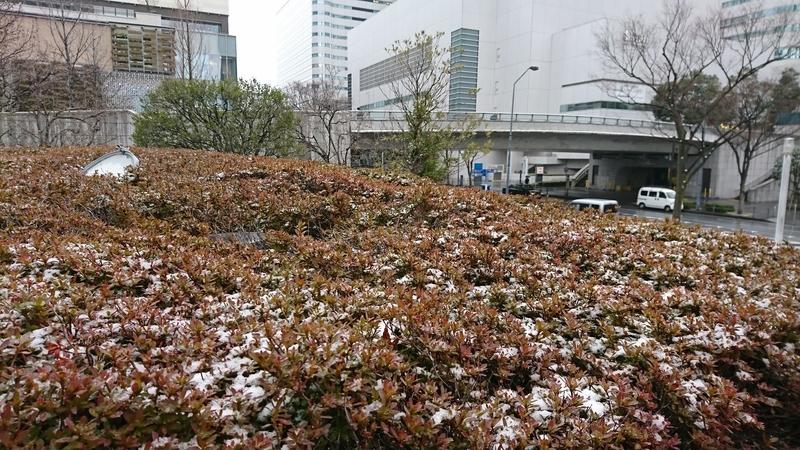 雪が降ってました