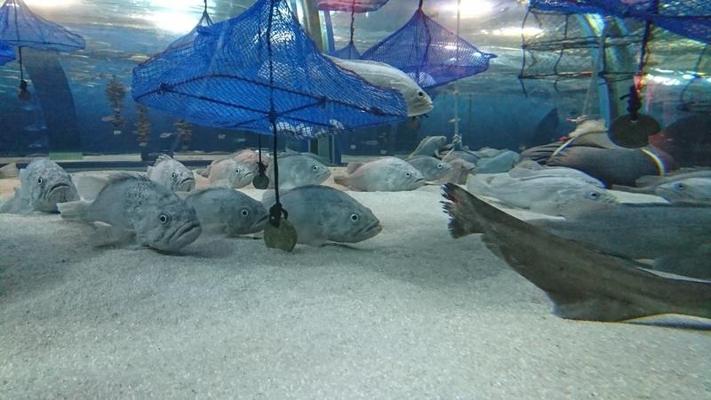 眠っている魚たち