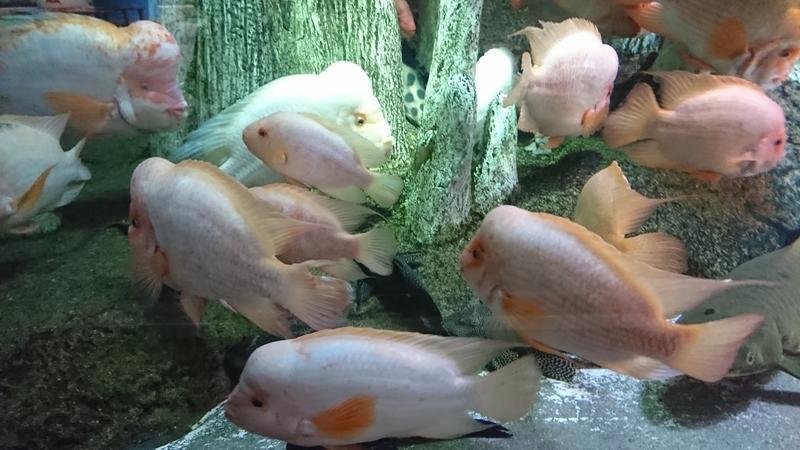 眠っている川魚2