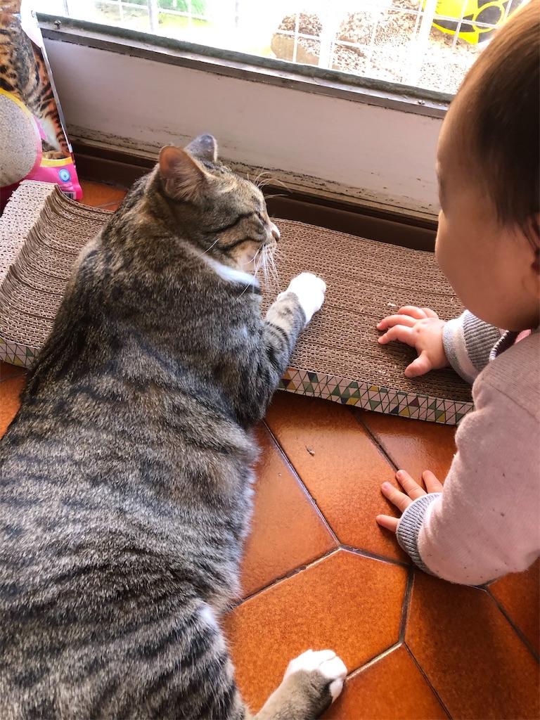 f:id:yonakano-undoukai:20200508021517j:image