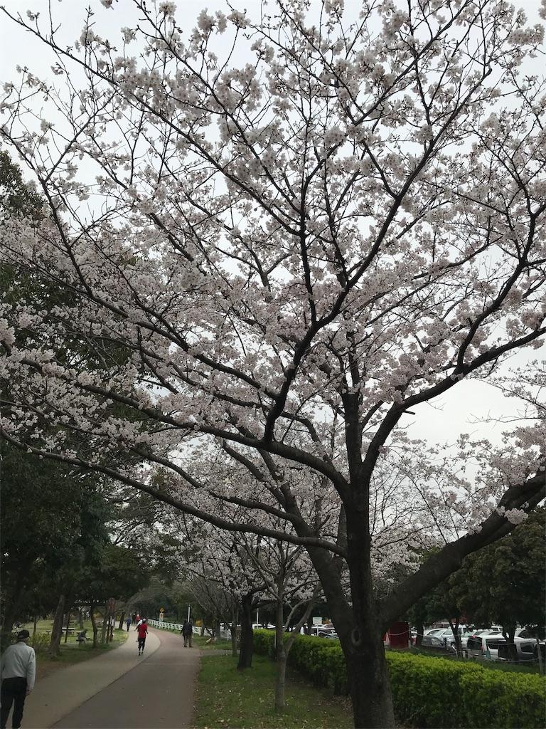 f:id:yoneba_1717:20190331192138j:image