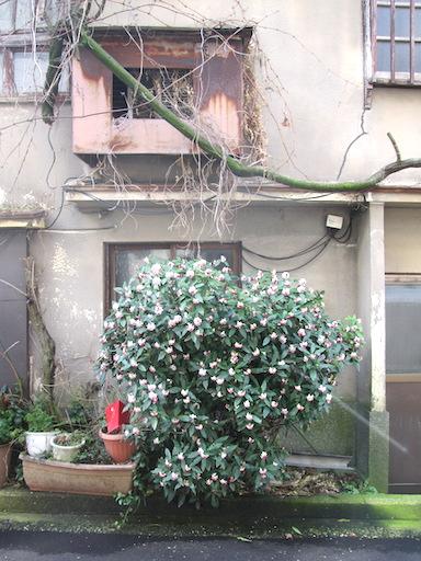f:id:yonhonda:20200308152010j:plain