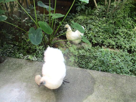 f:id:yonhonda:20200920101346j:plain