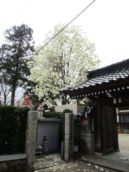f:id:yonhonda:20210326133820j:plain