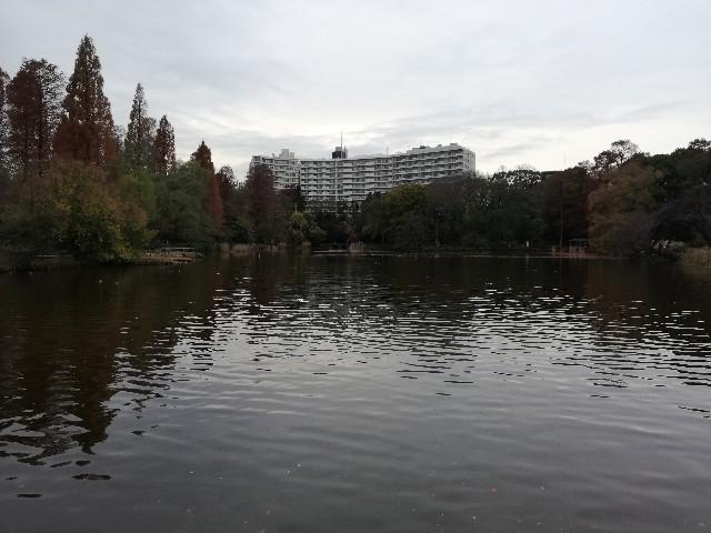 f:id:yonogishiki:20201207153248j:image