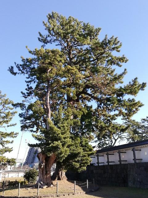 f:id:yonogishiki:20210107133515j:image
