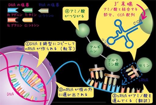 f:id:yoomayu:20210710112735j:image