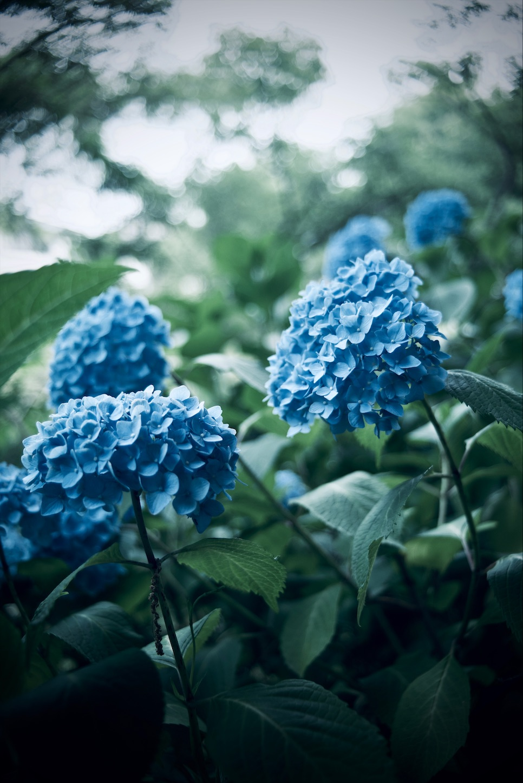f:id:yoppiphoto:20191224120019j:image