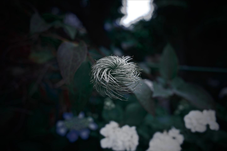 f:id:yoppiphoto:20191224120151j:image