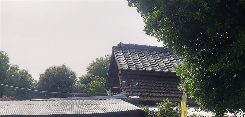 f:id:yoreyoreshogun:20210509234846j:plain