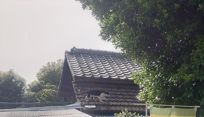 f:id:yoreyoreshogun:20210509234853j:plain