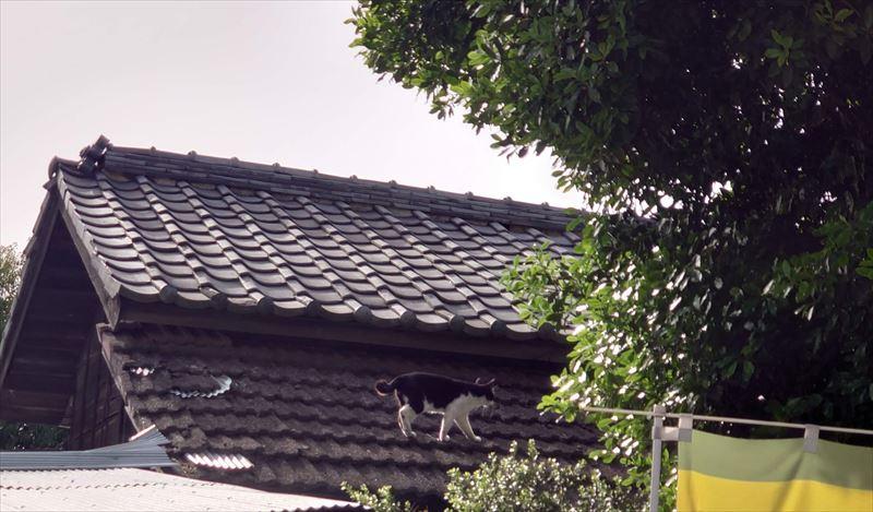 f:id:yoreyoreshogun:20210509234856j:plain