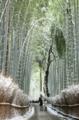 雪竹のトンネル