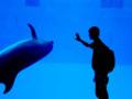 [動物][イルカ][水族館]挨拶