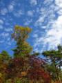 [紅葉][空]秋の空