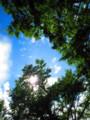 [空]夏の空