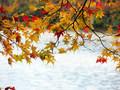 [紅葉][池]湖の紅葉