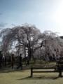 麻績の里舞台桜20130404_02