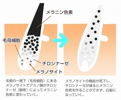 f:id:yoshi2000000:20181025105935j:plain