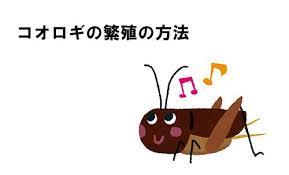 f:id:yoshi2000000:20181110155619j:plain