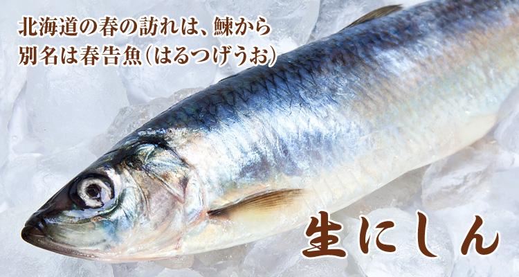 f:id:yoshi2000000:20181226142558j:plain